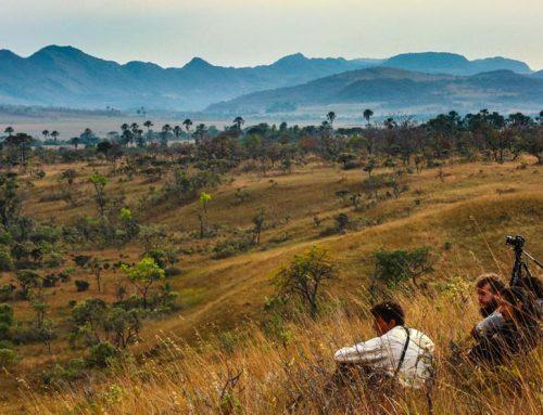 A devastação do cerrado no documentário Ser Tão Velho Cerrado