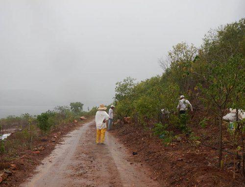 Choveu, tem que plantar: cada dia conta até 2035