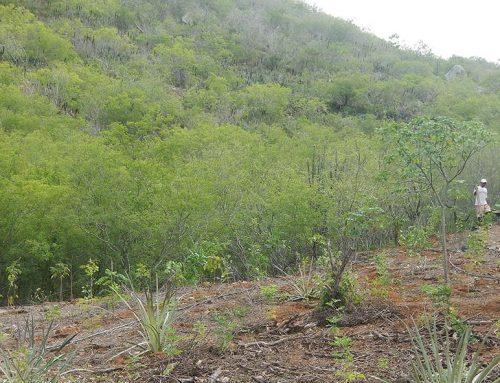 Mais chuvas, mais mudas plantadas na Reserva Mato da Onça
