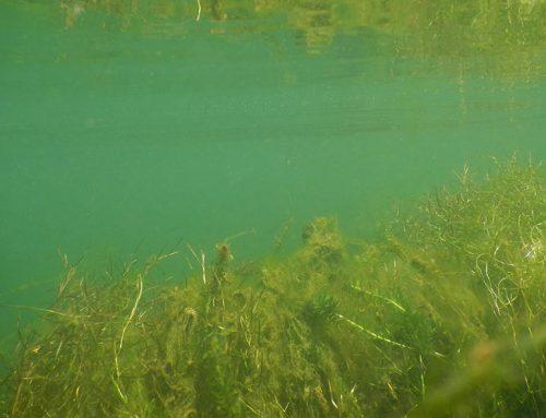 Questão dos trihalomentanos na água ainda sem esclarecimentos