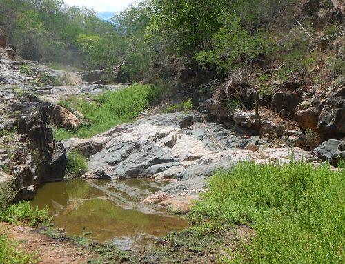 1.349 olhos d'água do sertão alagoano desapareceram – pesquisa da FUNDAJ
