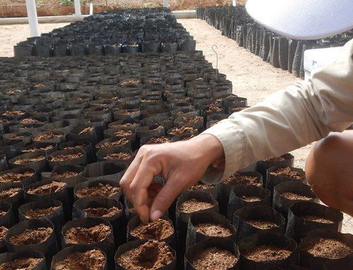 Primeira semeadura nas novas instalações do Viveiro da Reserva