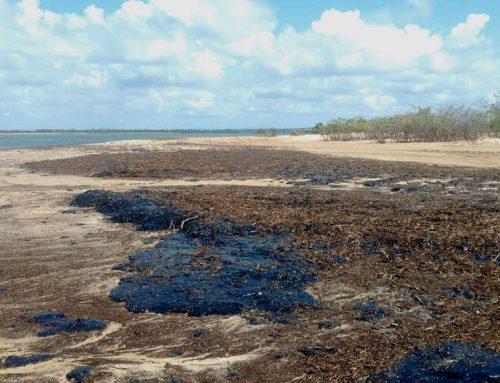 Óleo no litoral: Fundaj iniciou pesquisa  emergencial em 40 municípios do Nordeste