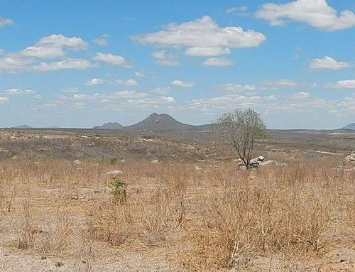 ONU: perda de biodiversidade sem precedentes na história