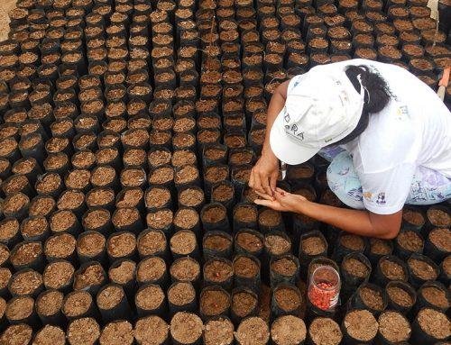 No viveiro da Reserva Mato da Onça, as primeiras semeaduras de 2020