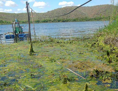 Sobradinho com mais água: o Baixo sem água e (muito) mais algas