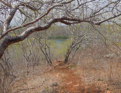 Pesquisa mapeia degradação ambiental em remanescentes de Caatinga