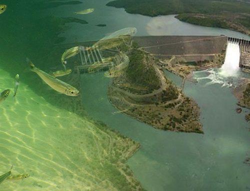 Rios brasileiros em perigo: parecer da AGU sobre UHE Formoso