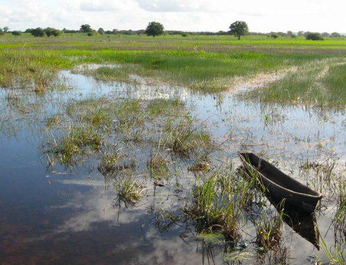 Taparica das várzeas: mais uma embarcação tradicional com seu DNA preservado