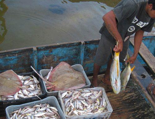 Pesquisa da UFAL: atividade pesqueira e impactos da pandemia da Covid-19: